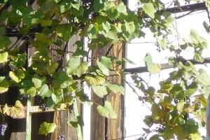 Burgenland-27--30Sep2007-00039
